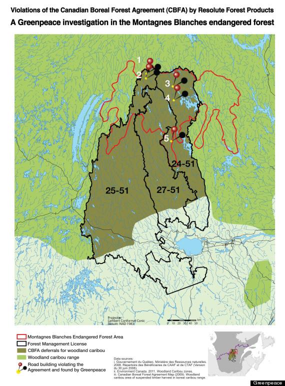 resolute logging caribou