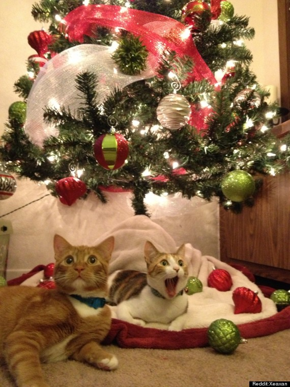 cat sees santa