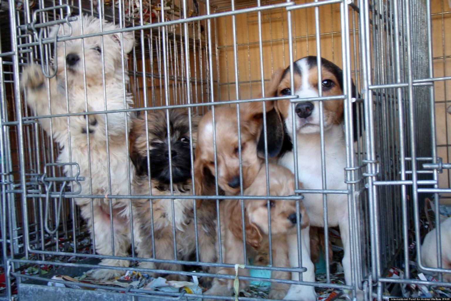 Online Puppy Mills International Fund For Animal Welfare