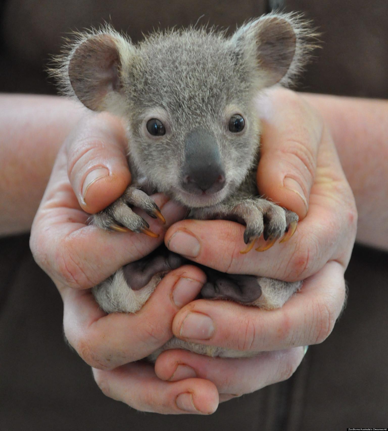 Baby Mammals Animals