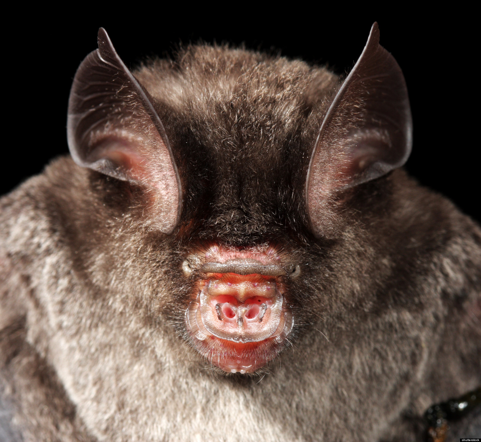 Bat Immunity Research May Shed Light On Cancer Infections