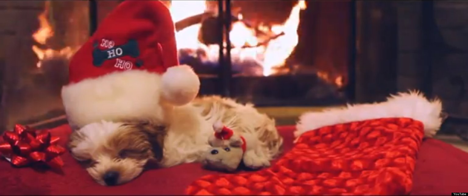 Puppy's First Christmas (VIDEO) | HuffPost