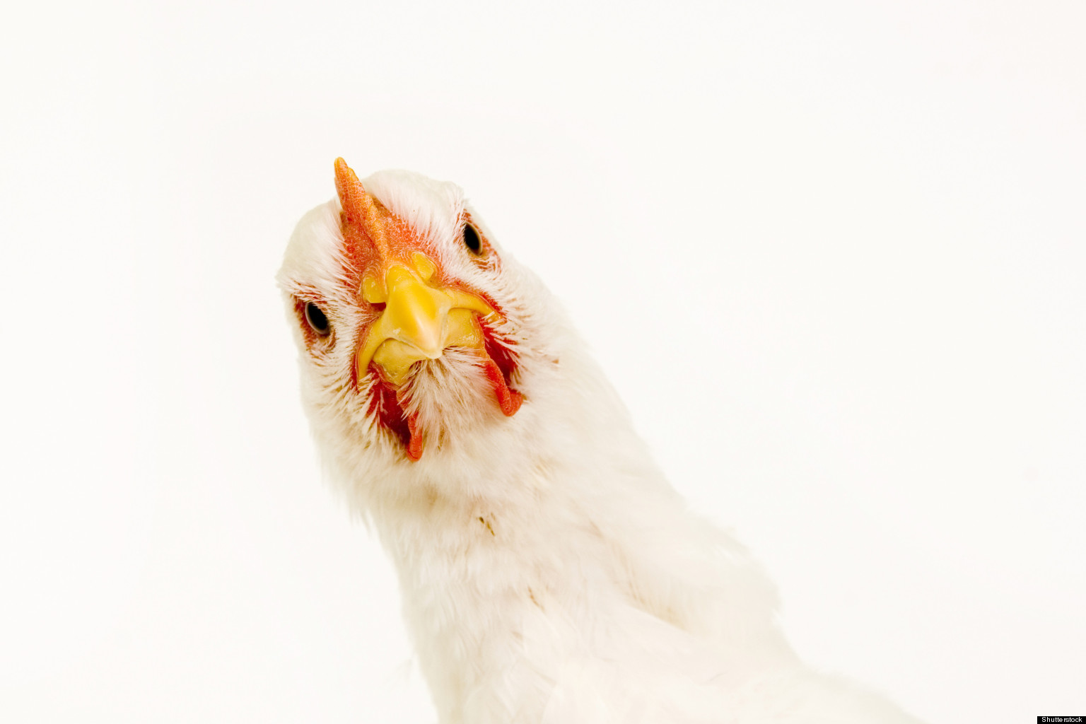the cruelest of all factory farm products eggs from caged hens