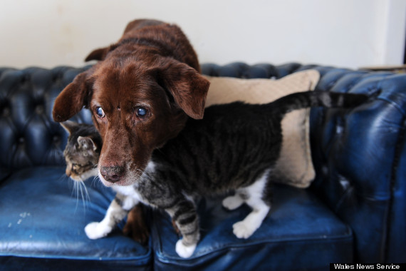 blind dog terfel and cat pwditat