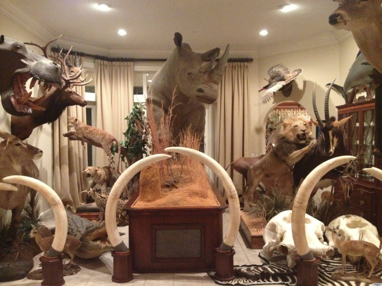 A Taxidermy Filled Home Is A Shocking Surprise For Party