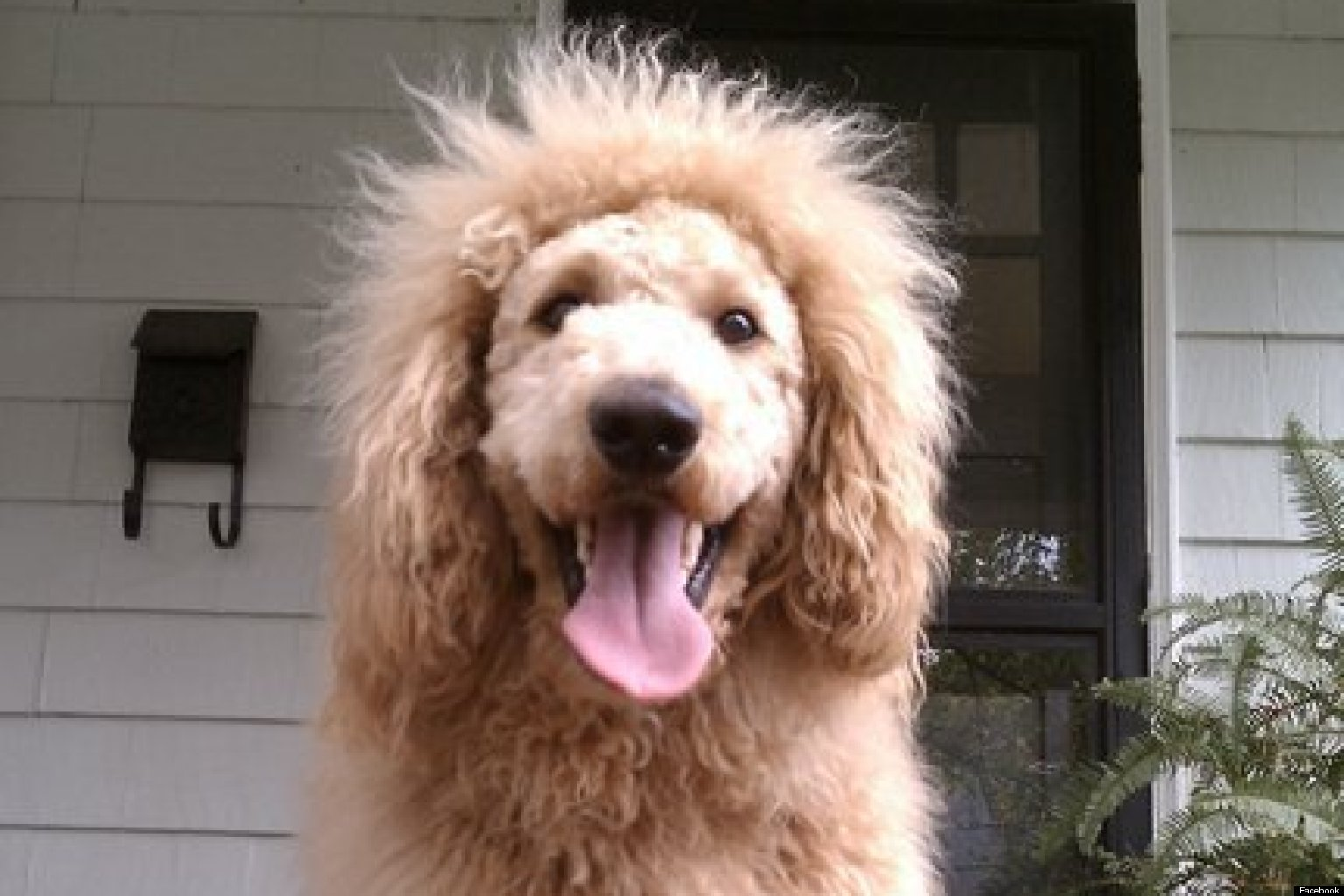 Charles The Monarch Dog Mistaken For Lion In 911 Call Photos