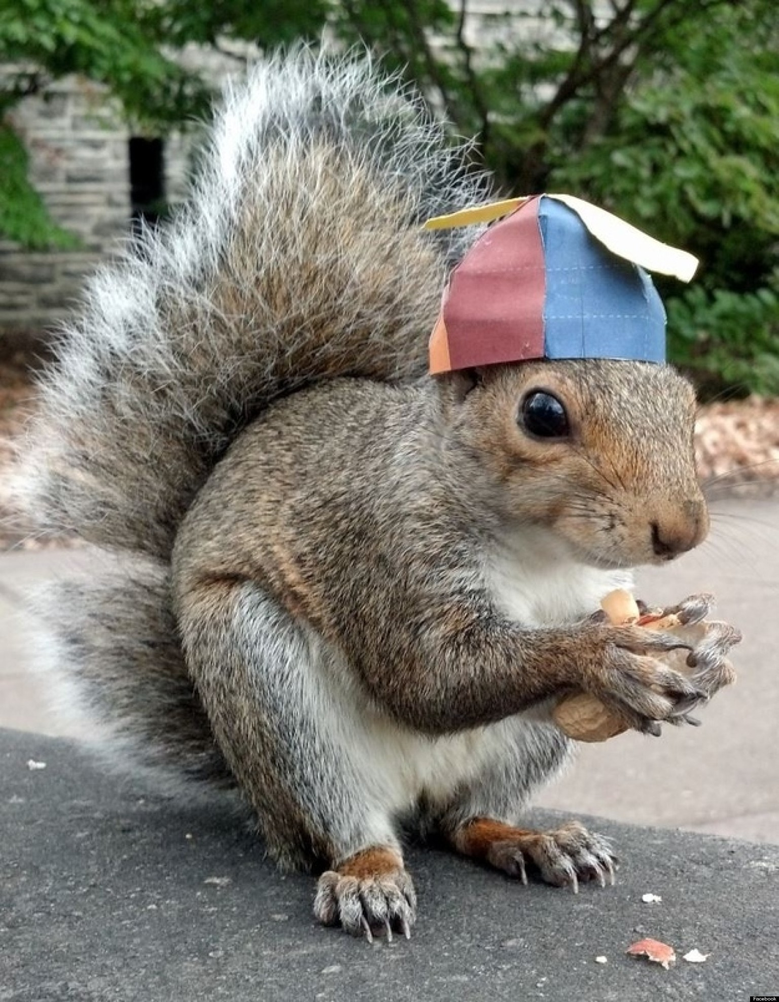 Sneezy The Squirrel Captures The Heart Of Penn State And