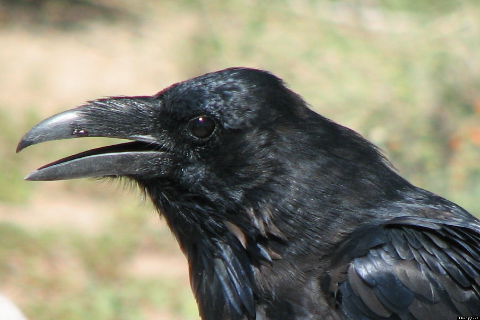Crow Indian Symbolism