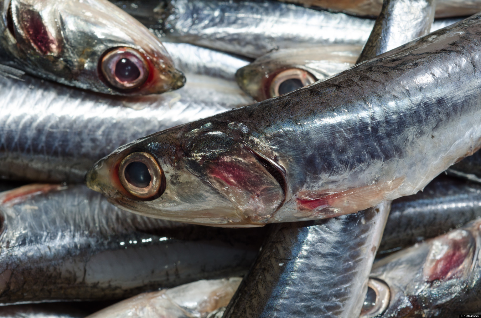 High mercury fish how to eat safe sustainable seafood for How do fish eat