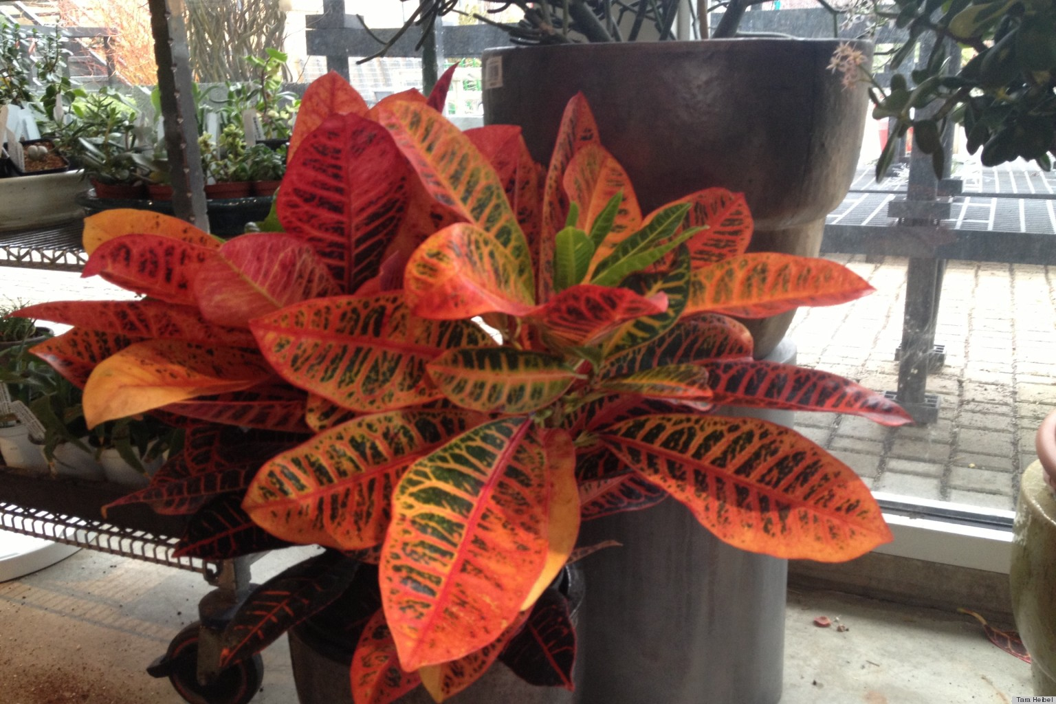 Sprout Home QA Of The Week All About Houseplants HuffPost - Common indoor houseplants identify