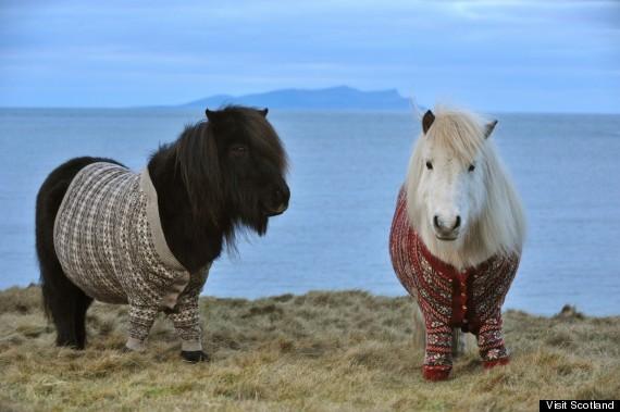 shetland pony cardigans