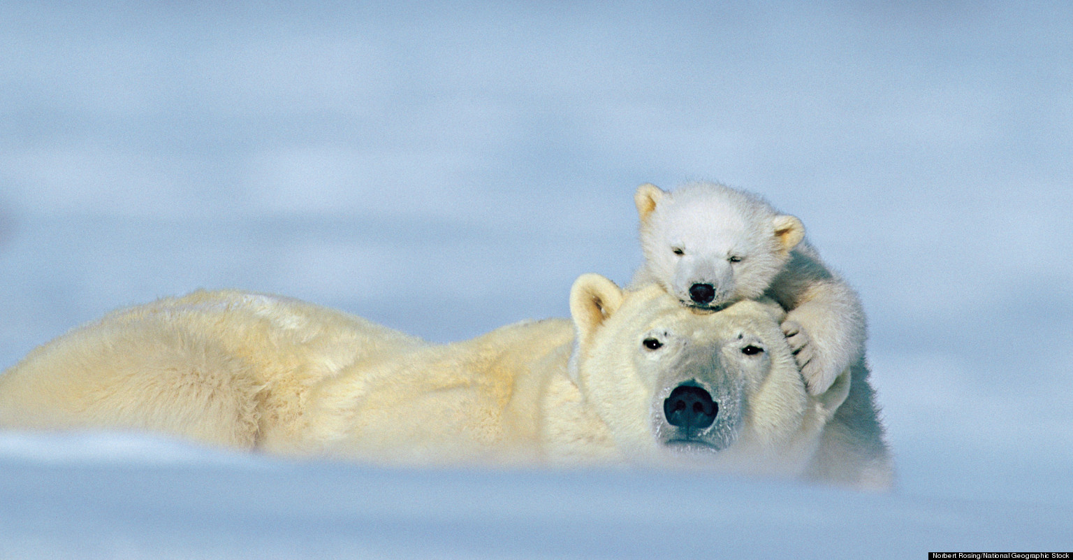 animal love photos national geographic previews images of animal