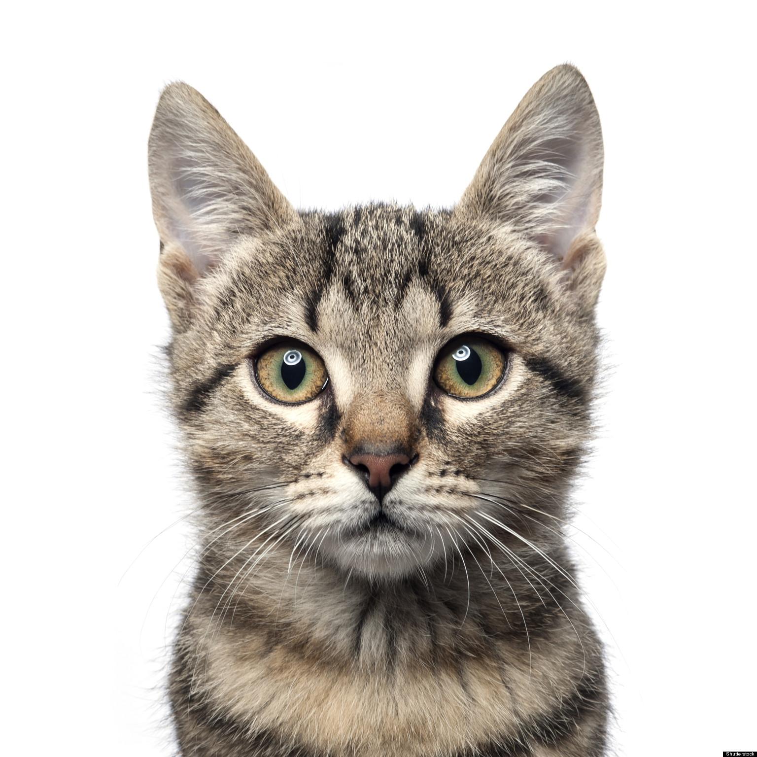 domestic cats kill billions of mice and birds per year study