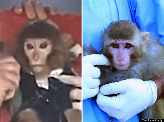 monkeyiransplitfake