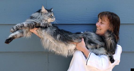 stewie worlds longest cat