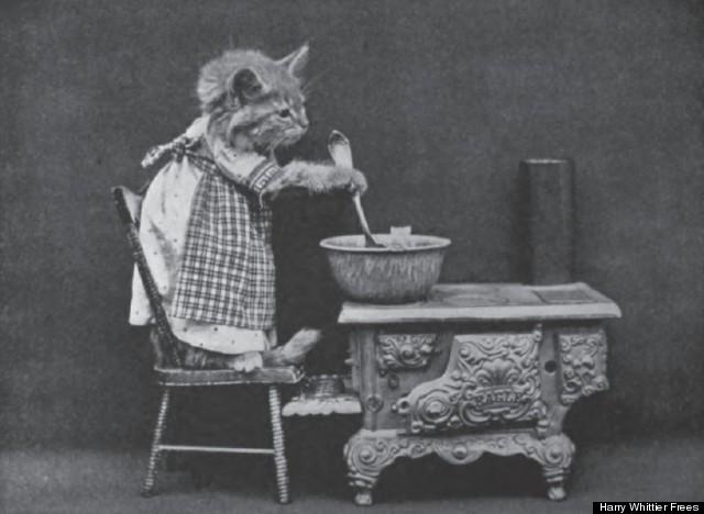 cat stirring