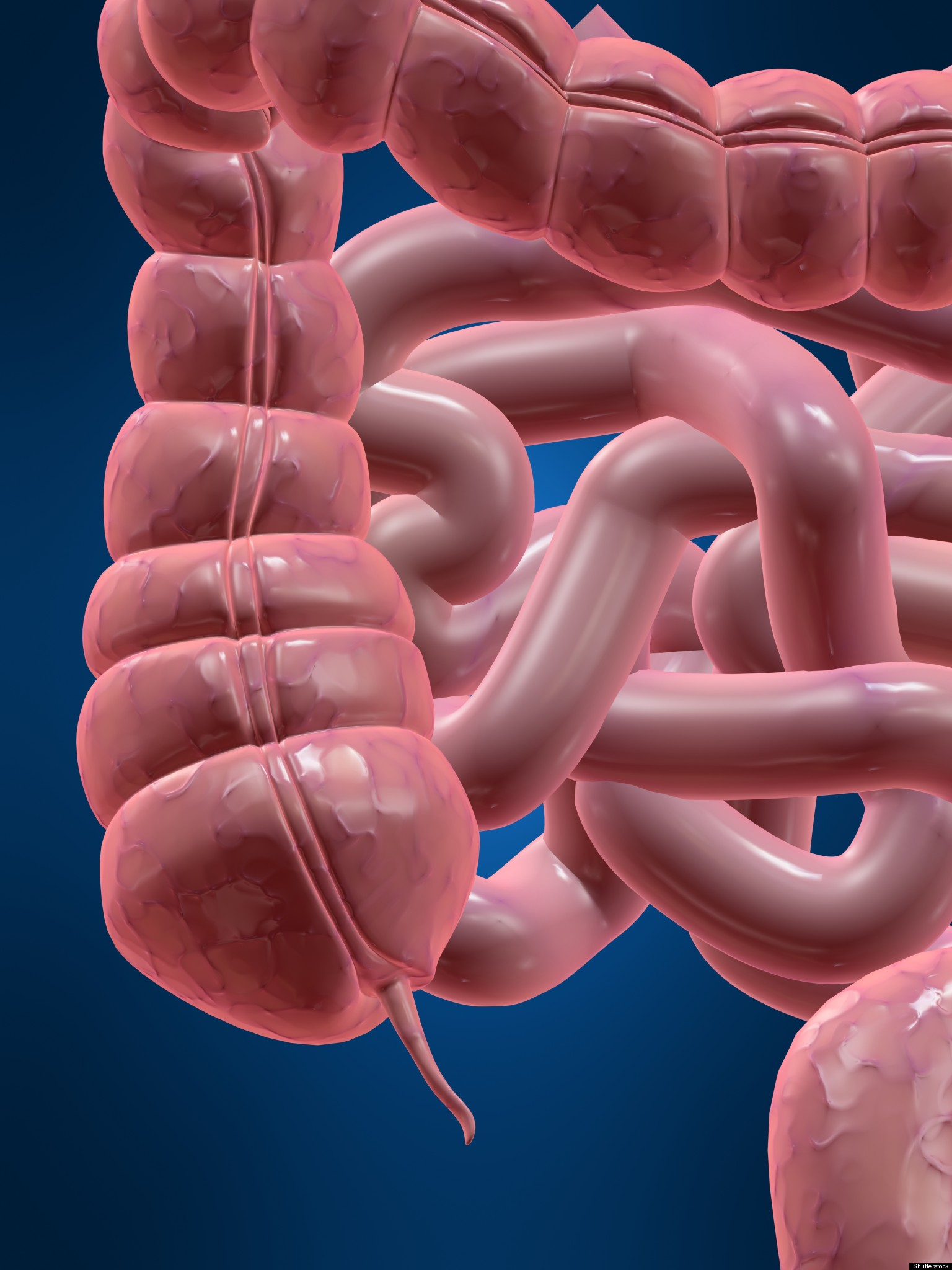 Appendix Evolved Over 30 Times, May Perform Useful Function ...