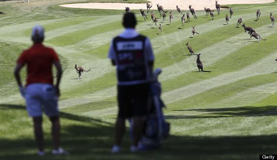 kangaroos lpga australian open